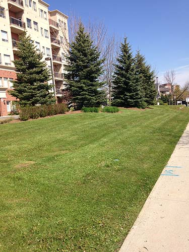 Commerical Landscaping - Commercial Property Maintenance - Condominium Property Maintenance - KDP Landscaping Inc Your Professional Landscaper serving Burlington, Oakville, Waterdown, Hamilton