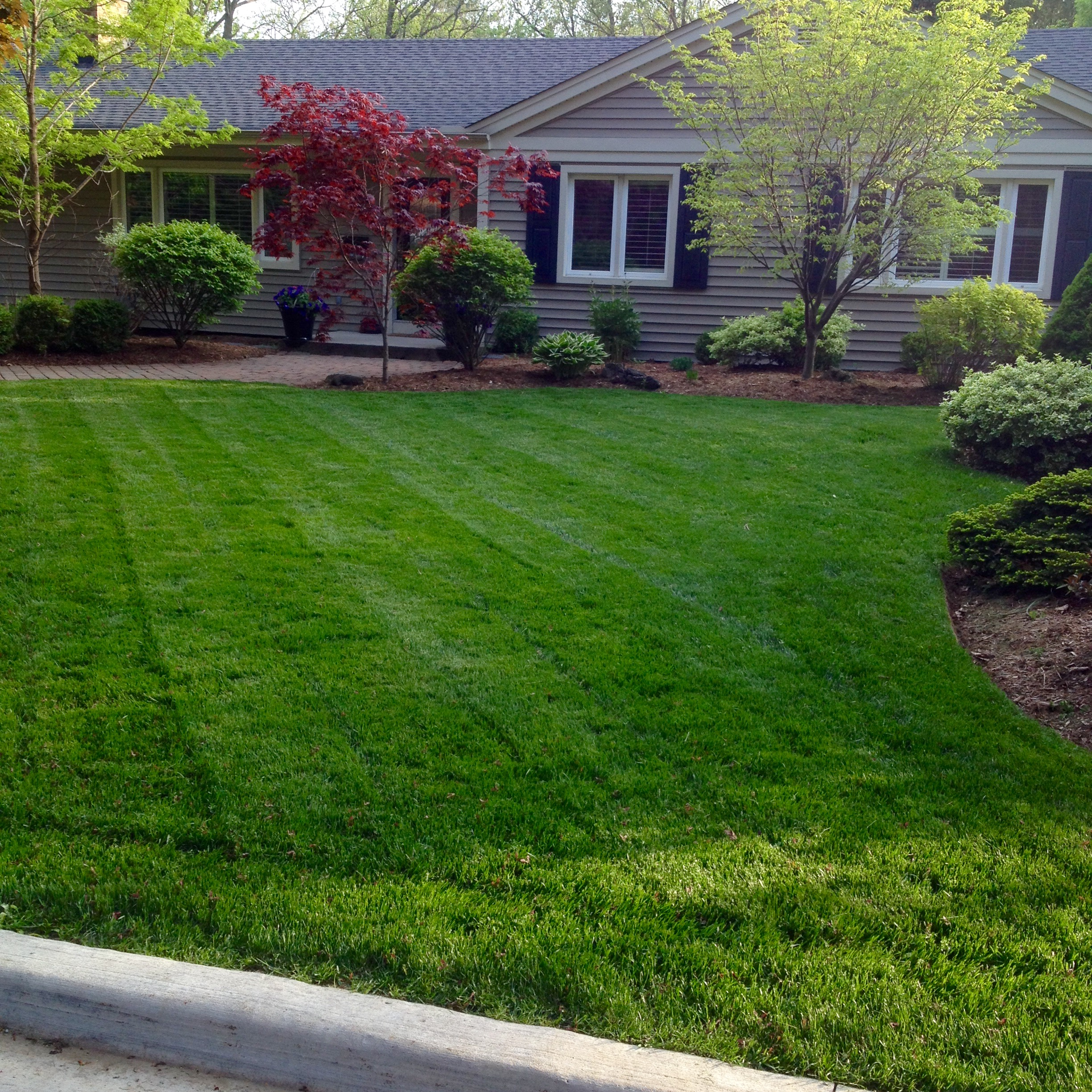 Img 7370 kdp landscaping for Lawn and garden care services
